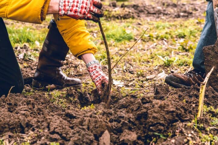 Boom planten met Finzie